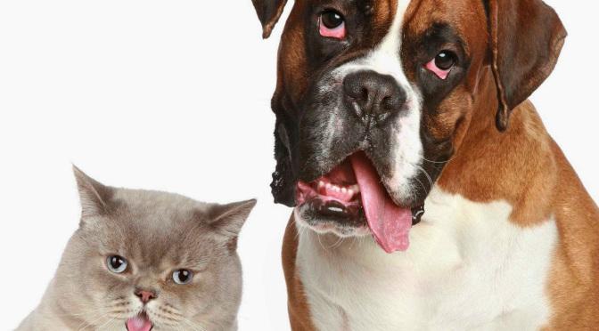 Ποιές ασθένειες μπορεί να κολλήσει ένας σκύλος από μια γάτα