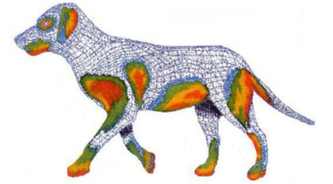 Σκύλοι με ατοπική δερματίτιδα:Αιτίες, διάγνωση και θεραπεία