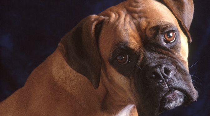 Φροντίδα τραυμάτων σε σκύλους
