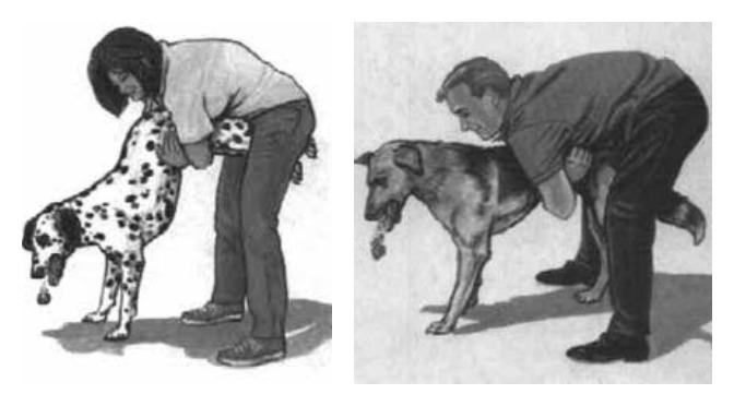 Πως να εκτελέσετε τη διαδικασία ελιγμού Heimlich σε έναν σκύλο που πνίγεται
