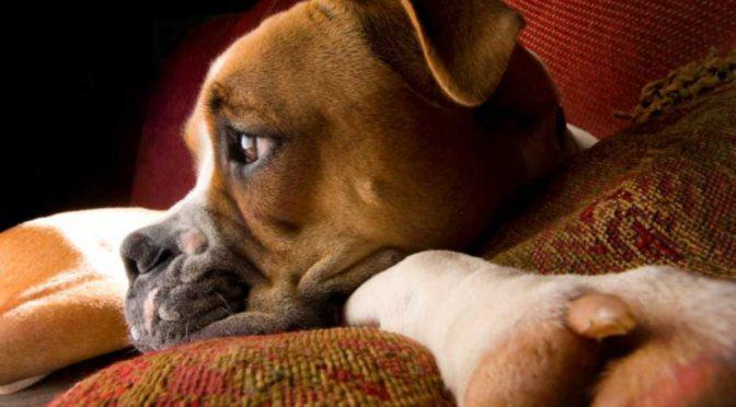 Δεν τρώει ο σκύλος;Πιθανές αιτίες και λύσεις.