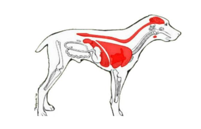 Μολύνσεις,στρες,στειρότητα και ερπητική λοίμωξη