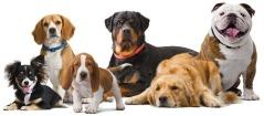 breed-info-dogs-hero