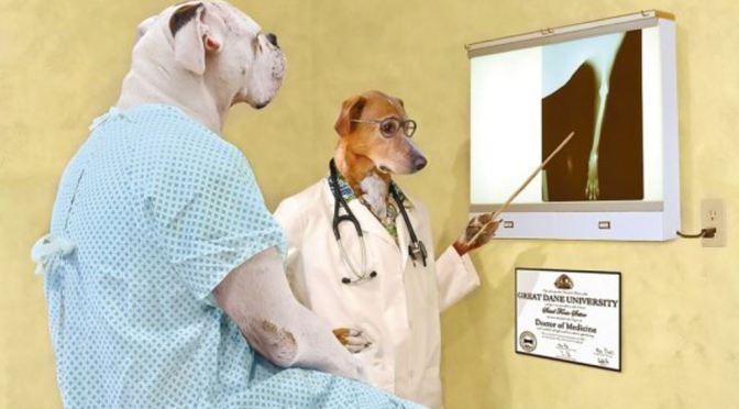 Πνευμονία (βακτηριακή) σε σκύλους