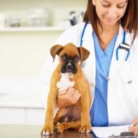 Φυσική θεραπεία για επιληπτικές κρίσεις σκύλου